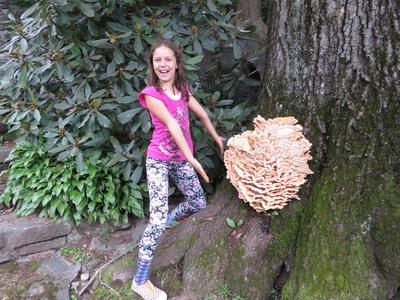 Violet's Chicken Mushroom